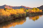 A horse drinks from the Verde River, Fort McDowell Yavapai Nation East of Phoenix, Arizona.