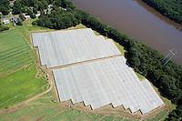 Shadegrown tobacco fields near Agawam, MA