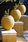 Terra Cotta Potted Plants
