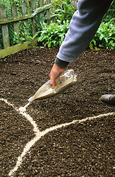 Sowing seeds outdoors<br /> Marking out curves with sand poured from a bottle