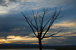 tree in Winter against a sunset sky in New Mexico