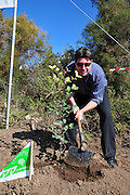 Israel, Mount Carmel, Isfiya, Jewish National Fund has organised a mass tree planting in the burnt Carmel forest for Tu Bishvat. Member of Knesset Ofir Akunis plants a tree.
