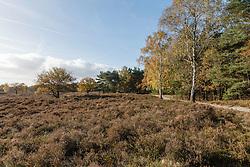 Huizen, Bikbergen, Noord Holland, Netherlands