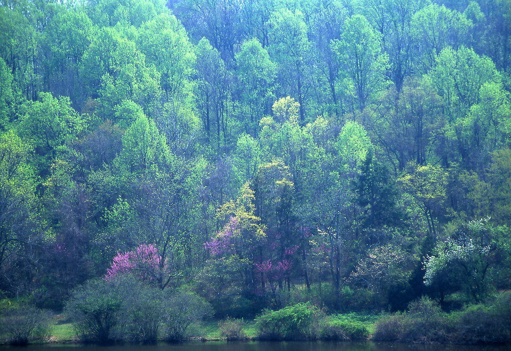 Springtime Forest, Welkinweir, Green Valley, French Creek, Philadelphia gardens and arboretums, Chester Co., PA