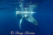 humpback whale mother and calf, Megaptera novaeangliae, resting at the surface, near Nomuka Island, Ha'apai group, Kingdom of Tonga, South Pacific