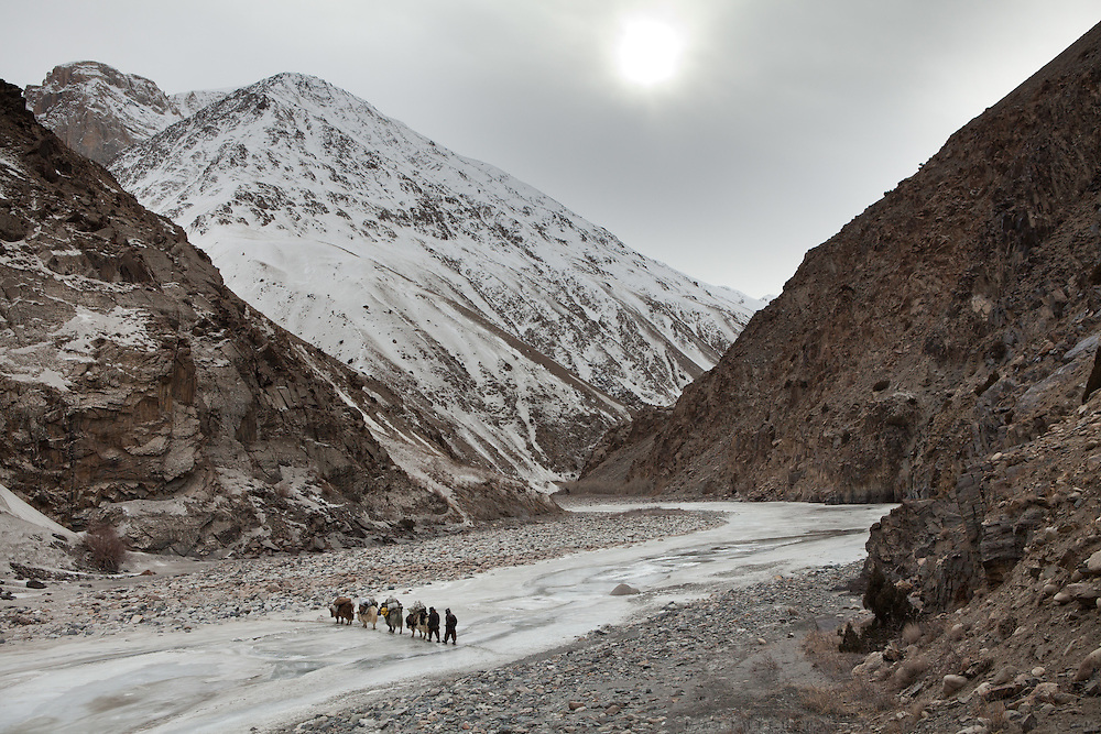 A yak caravan progresses. Between Zang Kuk and  Zard-e Bar shepherd house..Going back down to Sarhad village with a yak caravan led by 2 Wakhi traders: Shur Ali and Roz Ali...Trekking down the Wakhan frozen river, the only way down to leave the high altitude Little Pamir plateau, home of the Afghan Kyrgyz community.