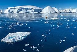 Kayaking, Hidden Bay, Antarctica