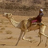 A Bedouin youngster flies through the desert in a camel race in the Wadi Rum, Jordan.