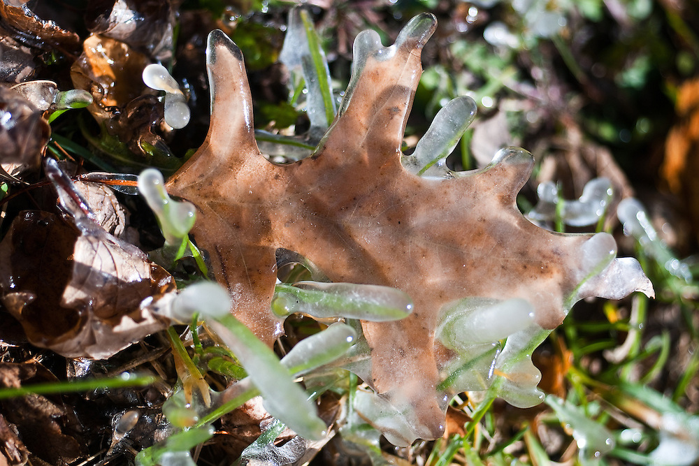 A leaf encrusted in ice is frozen in place Sunday outside the Central Nebraska Child Advocacy Center in Grand Island. Temperatures quickly dropped from Saturday evening's high 70s into Sunday morning's low 20s according to the National Weather Service in Hastings. (Independent/Matt Dixon)