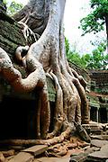 Angkor Ta Prohm