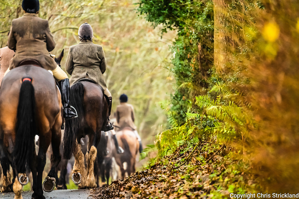 Lillisleaf, Selkirk, Scottish Borders, UK. 1st December 2018. The Duke of Buccleuch foxhounds flush foxes to guns in habitat rich farmland surrounding the Ale Water.
