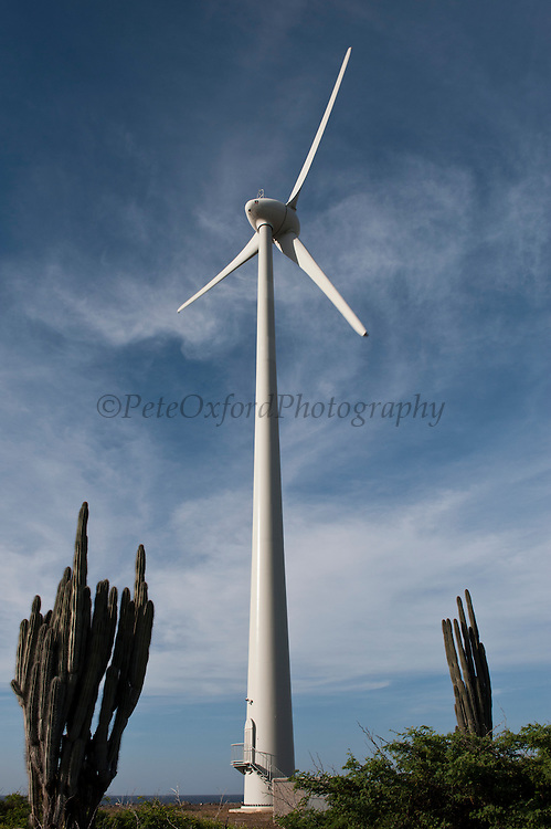 Wind Turbine, Bonaire Wind Farm<br /> They will be the first Caribbean island to run on 100% sustainable energy by 2015<br /> North Coast, BONAIRE, Netherlands Antilles, Caribbean<br /> HABITAT & DISTRIBUTION:<br /> Florida, Bahamas, Caribbean, Gulf of Mexico south to Brazil.