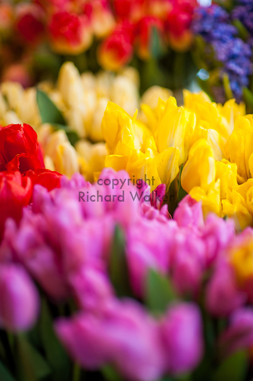 2018 MAY 15 - Flowers for sale in Pike Place Market in Seattle, WA, USA. By Richard Walker
