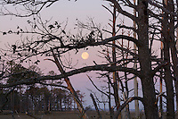 Chincoteague National Wildlife Refuge, Virginia, USA
