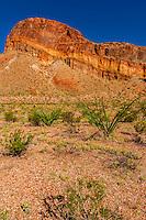 Ocotillos, Burro Mesa Pouroff Trail, Chihuahuan Desert, Big Bend National Park, Texas USA.