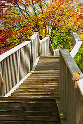A Reaching Staircase Into Vibrant Autumn Trees with a Female Cardinal Perched on the Rail.