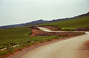 Road through the vineyards in Meursault leading to the village