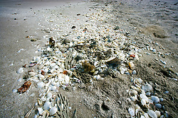 Corals, shells and sponges collect in a tideline on Eighty Mile Beach to the South of Broome.