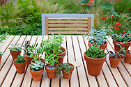 potted succulents grace the outdoor dining table