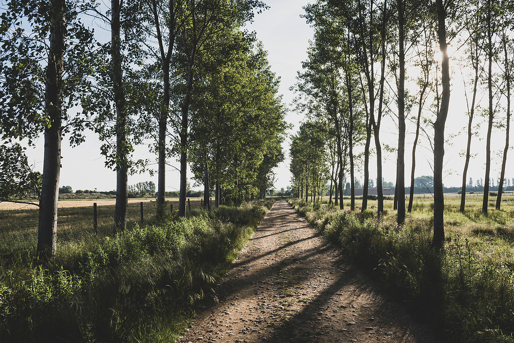 The Camino departs Boadilla del Camino early in the morning. (June 17, 2018)