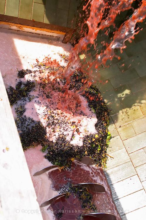 Grape hopper reception. Castel del Remei, Costers del Segre, Catalonia, Spain.