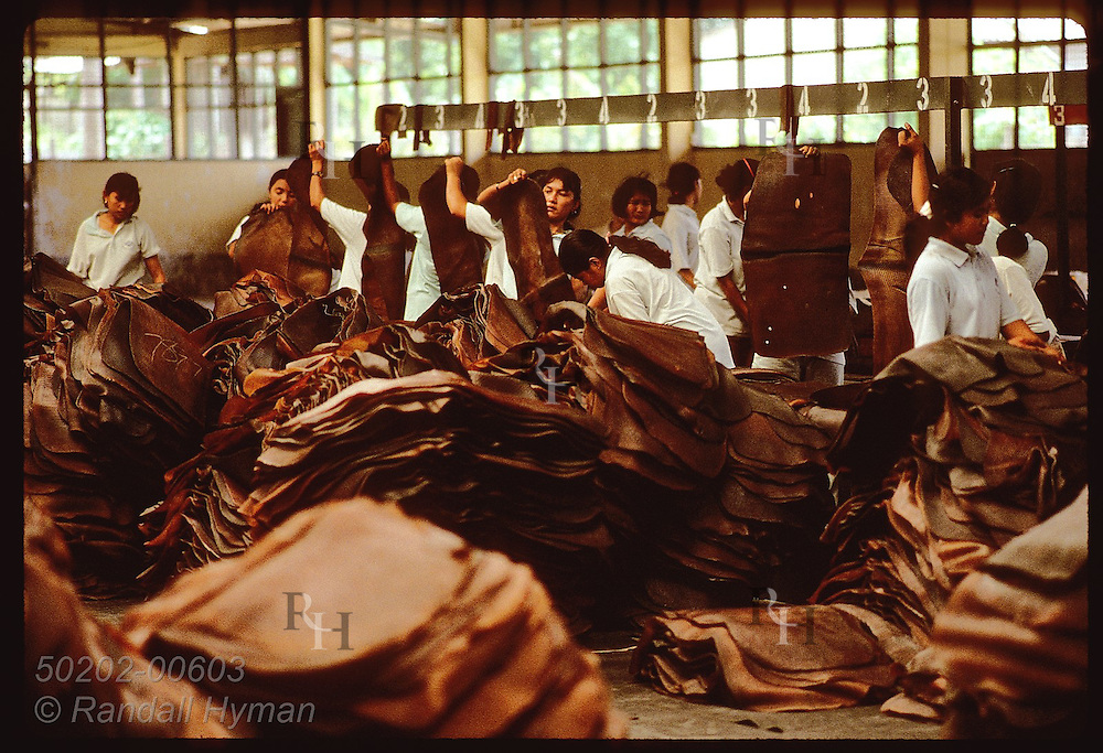 Rows of women armed with scissors inspect rubber mats to remove impurities before export; Krabi. Thailand