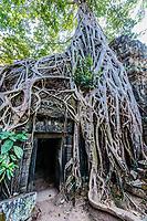 Ta Prohm Angkor Wat Cambodia