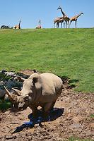 Rhinoceros & Giraffes