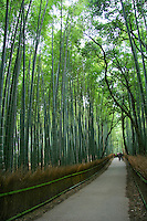 """Arashiyama Bamboo Grove Arashiyama is a district on the western outskirts of Kyoto, Japan. It also refers to the mountain across the Oi River, which forms a backdrop to the district.  Its famous Sagano Bamboo Grove is one of the most beautiful bamboo forests in Japan. The sound of the wind in this bamboo forest has been voted as one of """"one hundred must-be-preserved sounds of Japan"""" by the Japanese government."""