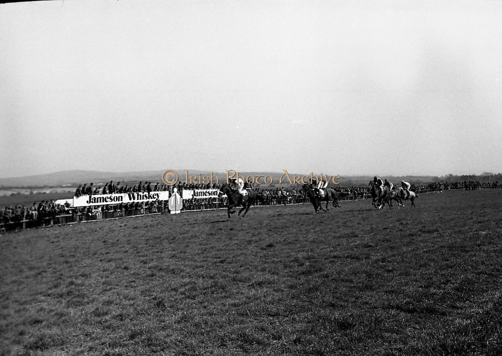 """Racing At Punchestown. K22.<br /> 1976.28.04.<br /> 1976.04.28.<br /> 1976.<br /> 28th April 1976.<br /> The John Jameson Cup race was run on this day at Punchestown. The sponsor of the race was Irish Distillers Ltd. The race, an extended handicap novice steeplechase, is for horses that are four years old or above that have not won a steeplechase on or before 1st Sept.,75. The race was won by """"No Hill"""" owned by Mrs J. B. O'Callaghan, ridden by Mr T. M. Walsh and trained by Mr R Walsh. <br /> <br /> Image shows that  Mrs F. J. O'Reilly, wife of the chairman of Irish Distillers, presenting the cup to the owner of """"No Hill"""", Mrs J. B. O'Callaghan (right). Also Included in the photograph was Mr O'Callaghan. <br /> <br /> Image shows that  """"No Hill"""" coming from third place to challenge for the lead."""