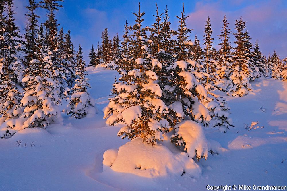 Last light on tree line<br /> Churchill<br /> Manitoba<br /> Canada