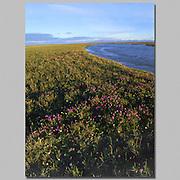 Alaska. Arctic National Wildlife Refuge. ANWR. Coastal plain.