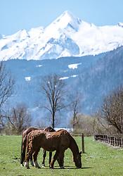 THEMENBILD - Pferde auf einer Wiese in Saalfelden mit Blick auf das schneebedeckte Kitzsteinhorn, aufgenommen am 20. April 2019, Saalfelden, Österreich // Horses on a meadow in Saalfelden with a view of the snow-capped Kitzsteinhorn on 2019/04/20, Saalfelden, Austria. EXPA Pictures © 2019, PhotoCredit: EXPA/ Stefanie Oberhauser