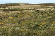 Lundy, Devon, with Tibbett's in background