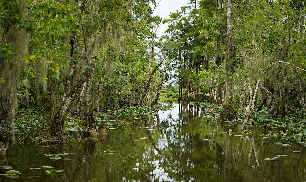 The Everglades are subtropical wetlands located in the southern portion of the U.S. state of Florida. This is a National Park and a very popular travel destination.