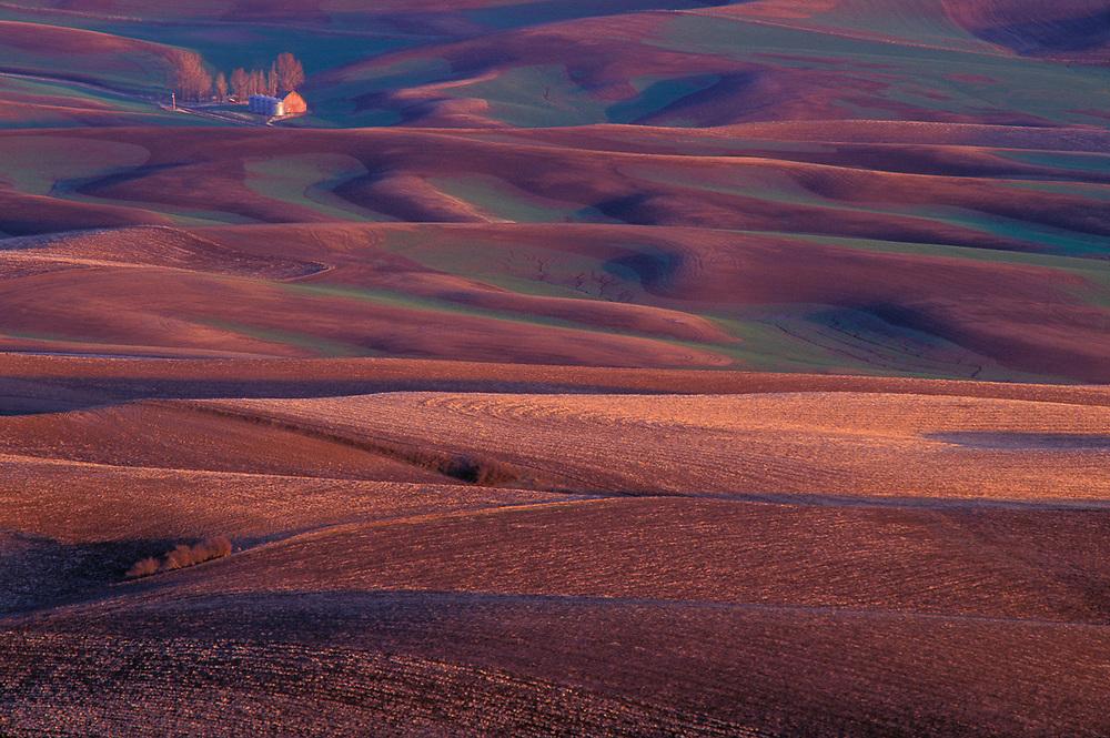 Wheat fields, evening light, September, viewed from Steptoe Butte State Park, Palouse Hills, Washington, USA.
