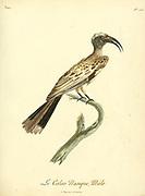 Male Calao nasique african grey hornbill. from the Book Histoire naturelle des oiseaux d'Afrique [Natural History of birds of Africa] Volume 5, by Le Vaillant, Francois, 1753-1824; Publish in Paris by Chez J.J. Fuchs, libraire 1799