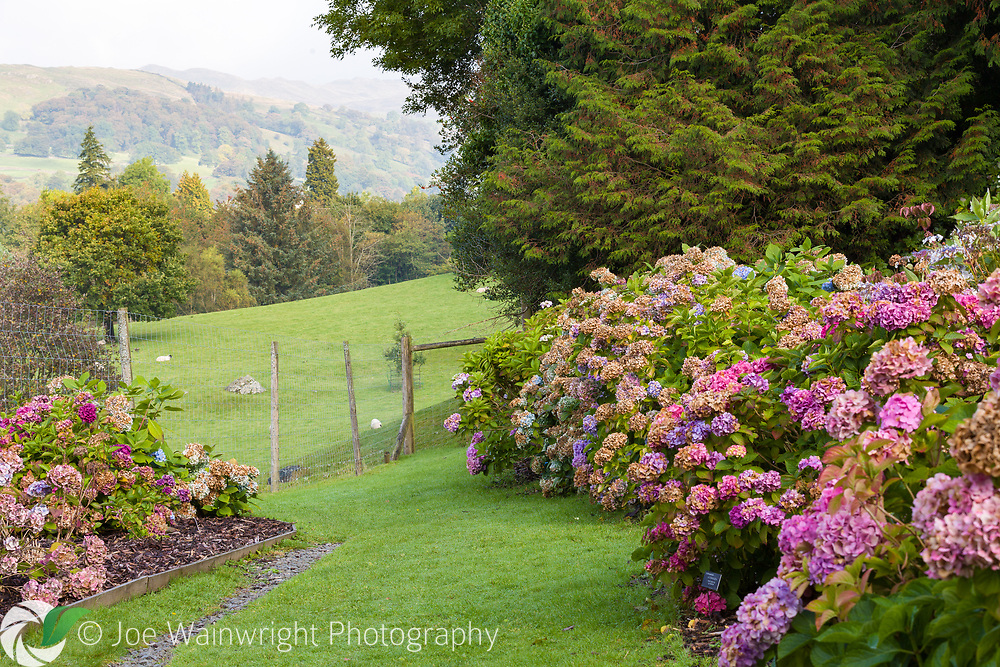 Holehird Gardens, near Ambleside, Cumbria, is the home of the Lakeland Horticultural Society. Visitors can enjoy large rock and heather gardens, Hydrangeas, roses, Astilbes, and a walled garden with lush herbaceous borders.
