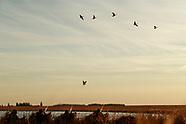 N Dakota Waterfowl