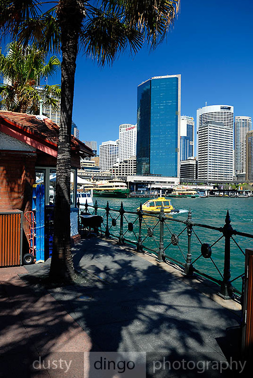 Palm trees, railing, Water Taxi, and Circular Quay skyline. Circular Quay, Sydney, Australia
