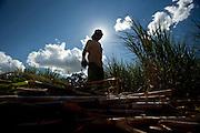Patos de Minas_MG, Brasil...Cacharia que fabrica aguardente para exportacao em Patos de Minas, Minas Gerais. Na foto cortacao de cana-de-acucar...The cachaca production for exportation in Pato de Minas, Minas Gerais. In this photo the sugar cane crop...Foto: LEO DRUMOND / NITRO