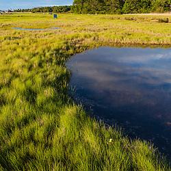 """""""Massacre Marsh"""", a salt marsh in Rye, New Hampshire."""