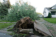 6/27/08 Omaha, NEB.A tree uprooted took part of the sidewalk near 48th and Farnam streets..Damage photos from the storm that hit Omaha on Friday afternoon..Chris Machian/Omaha World Herald