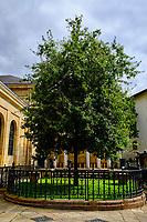 Espagne, Pays basque espagnol, Biscaye, Gernika-Lumo, l'arbre de Guernica à la maison des Juntes // Spain, Spanish Basque Country, Biscay, Gernika-Lumo, the Guernica tree at the House of the Juntes