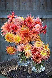 Vases of mixed dahlias