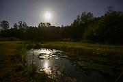 Nederland, Ubbergen, 13-5-2014Nachtopname van een natuurgebied bij het licht van de volle maan.Foto: Flip Franssen/Hollandse Hoogte