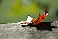Nature, ohio, leaves