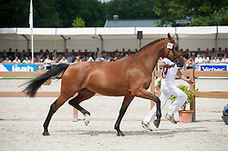 117, Fifty Firenze C<br /> Nationale Merriekeuring, 4 tem 7 jarige Keur-en Elitemerries<br /> KWPN Paardendagen Ermelo 2015<br /> © Hippo Foto - Leanjo de Koster