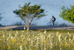 Cyclists on path around lake behind field of wildflowers and Arkansas yucca (Yucca arkansana), Blackland Prairie remnant, White Rock Lake, Dallas,Texas, USA
