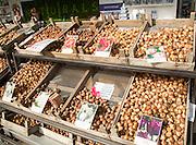 Trays of tulip bulb varieties on display, Rotterdam, Netherlands